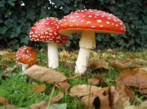What Should We Know About Mushroom Poisoning